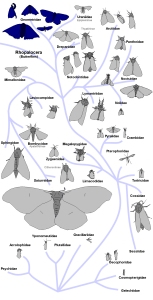 guide to live moths